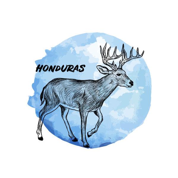 Logo Cafés de Especialidade Senzu Honduras Azul