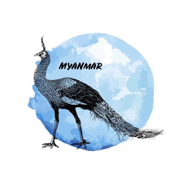 Logo Cafés de Especialidade Senzu Myanmar Azul